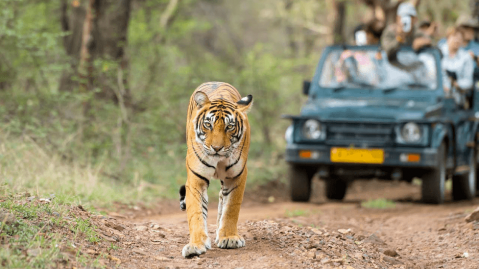 Top 15 Wildlife Sanctuaries in India to Encounter the Wild