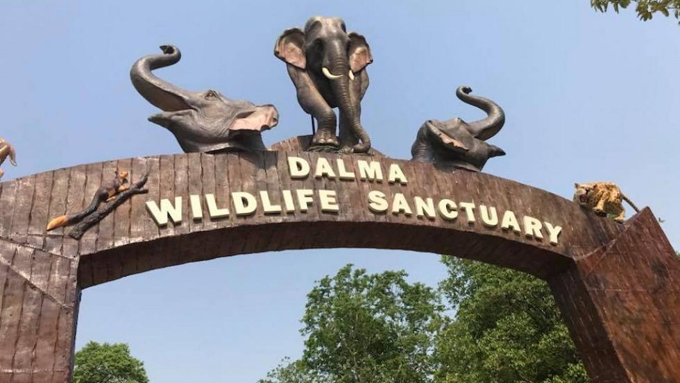 Wildlife Sanctuaries in India Dalma Wildlife Sanctuary in Jamshedpur