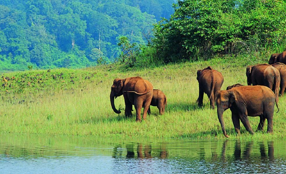 Wildlife Sanctuaries in India Wayanad Wildlife Sanctuary in Wayanad