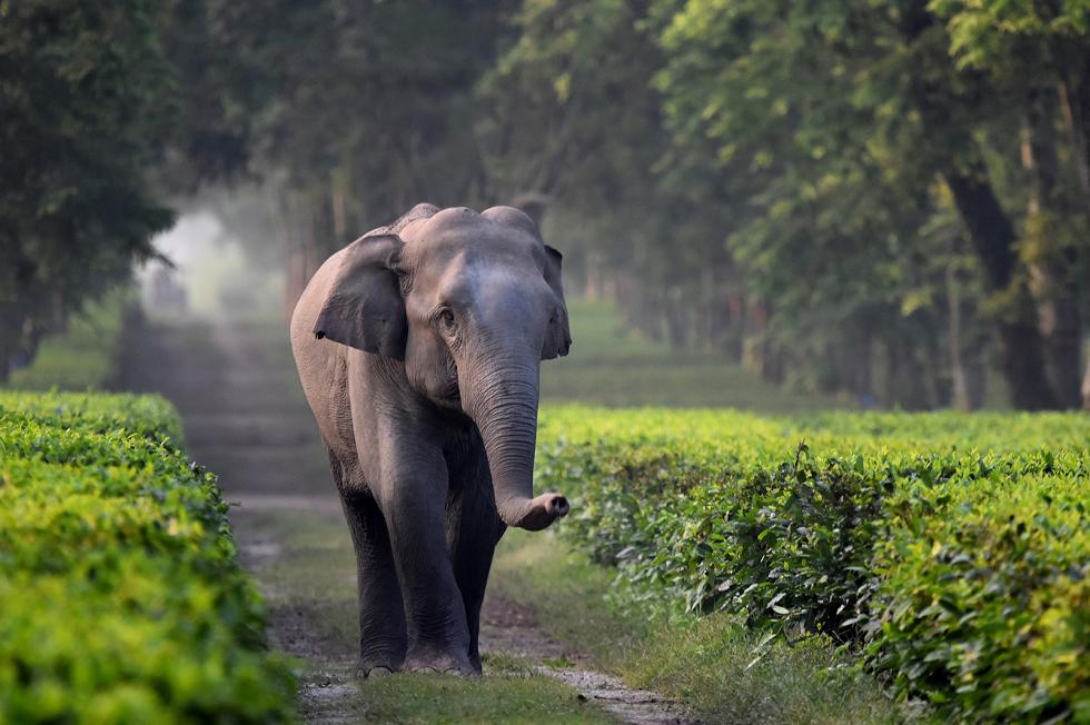 Wildlife Sanctuaries in India Benog Wildlife Sanctuary in Mussoorie