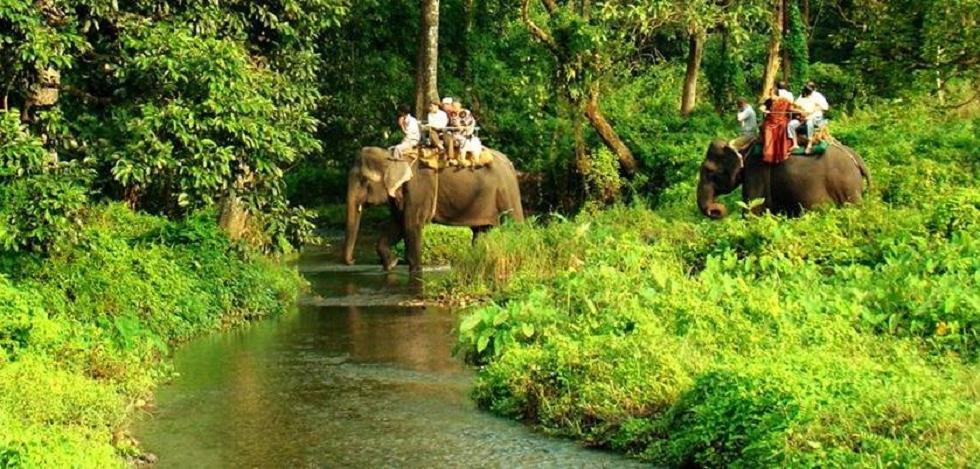 Wildlife Sanctuaries in India Jaldapara National Park