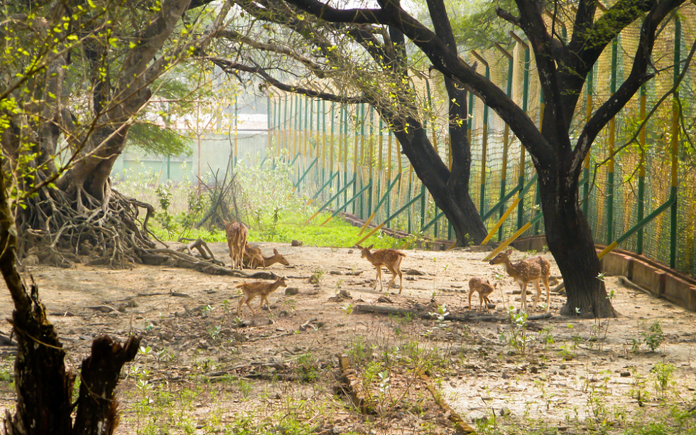 Wildlife Sanctuaries in India Bhadra Wildlife Sanctuary in Chikmagalur
