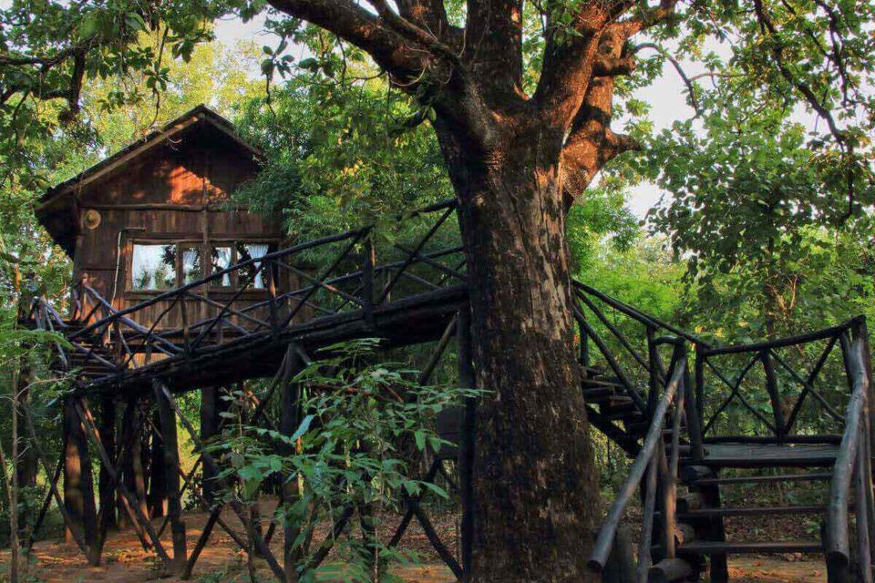 tree houase bandhavagarh